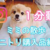 【動画】ミミの散歩、ニトリ購入品紹介『インスタ』